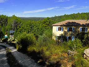 Welcome to Green Provence: woods, vineyards and olive fields as far as you can see...